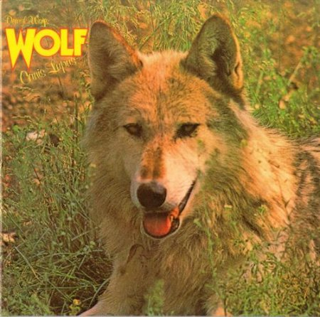 Darryl Way's Wolf - Canis lupus 1973